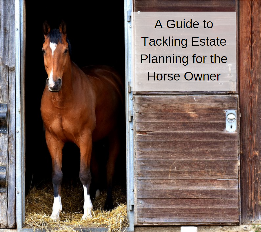 A Guide to Tackling Estate Planning for the Horse Owner
